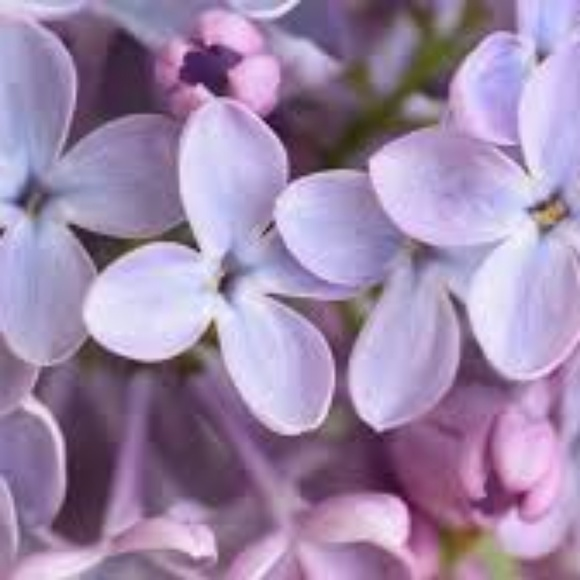 flowerhome